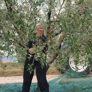 La nostra amica Grete durante la raccolta delle olive.