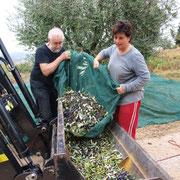 Daniela con il nostro amico Bo scaricano le olive nella benna.