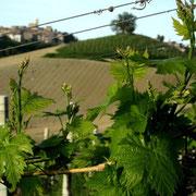 Monte Giberto sullo sfondo