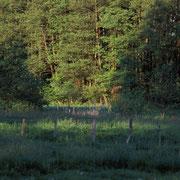 Feuchtwiese im Sommer