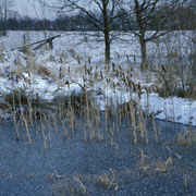 Teiche im Winter