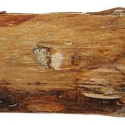 """""""segni d'intelligenza vegetale"""" foglia oro e rifinitura a vernice all'acqua cm33x5"""