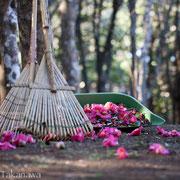 椿の花の絨毯
