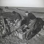 Wälle bauen, Kampen 1953