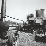 Rapsernte, Wensin zwischen 1942 und 1944