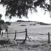 Holsteiner Landschaft I, Wensin zwischen 1936 und 1944