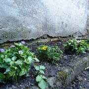 Frühlingszauber im Hofgarten der Hospitalstrasse