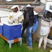 Bienen am Schuldach
