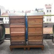 Bienen am Hotel