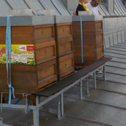 Bienen am Rathausdach