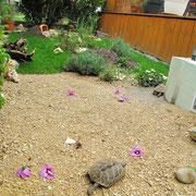 Unser Freilandgehege ist noch nicht ganz fertig da werden noch viele Futterpflanzen und Kräuter im nächsten Jahr eingepflanzt --- © Karin