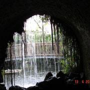 Dans la serre aux papillons (Insel Mainau)