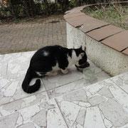 Un gentil chat qui apprécie nos croquettes.