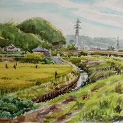 稲田ー水路初秋 2007年