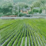 梅雨に伸びる 2011年