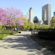 Frühling im Central Park.