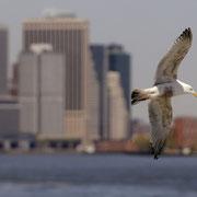 Zwischen den Ufern verbreiten Möwen ein maritimes Gefühl von Freiheit.
