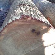 grume de tranchage chêne