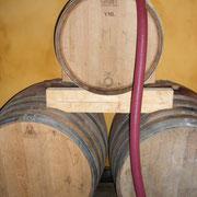 vinification Accueil vignoble à Ribaute au Domaine des Cascades à Ribaute