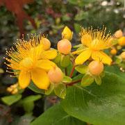 Blütenpracht im Garten