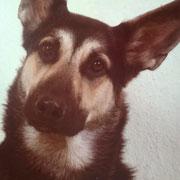 Nero - eine Seele von Hund und der Begleiter meiner Kindheit
