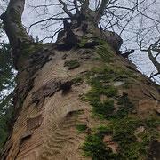 kunstvoller Baumstamm