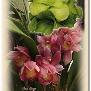 Carte 15 - FLORILÈGE EN PAYS D'ORTHE (Fleurs2)