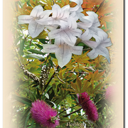 Carte 12 - FLORILÈGE EN PAYS D'ORTHE (Fleurs1)