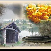 Carte 07 - Images d'EAUX en PAYS D'ORTHE (Fleurs d'Or)