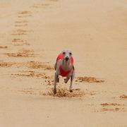 Quichote auf der Sandbahn beim Lizenzlauf!