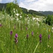 Kalkniedermoor Vorarlberg