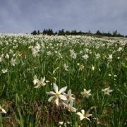 Almwiesen Kärnten
