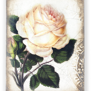 T-374 SWEET  ROSE (retired)  - signed by Sid Dickens  | 100 €