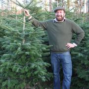Das ganze Jahr werden die Tannen per Hand gepflegt - geschnitten, gesnippt, gekürzt - damit sie zu schönen Weihnachtsbäumen werden.