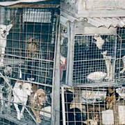Animalhope (refuge pour animaux) en Slovaquie