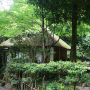 広島 帰省 家族 両親 誕生祝い 昇進祝い 出版祝い モミノキ 原爆 三滝寺 茶