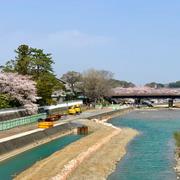 伊勢神宮 参拝 満開 桜