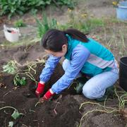 芋掘り さつまいも 自家農園 無心