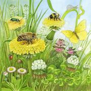 Ich bin die kleine Biene 1