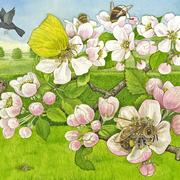 Ich bin die kleine Biene2