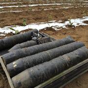 1500本の苗がこのポットから茶畑へ。
