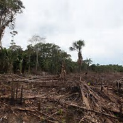 Déforestation en Colombie