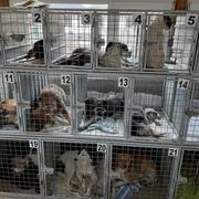 6 Tiere in Rumänien, Equiwent - Schmiede ohne Grenzen eV
