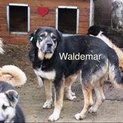 1 Tier in Rumänien durch Namenspatenschaft Waldemar, Pro Dog Romania eV