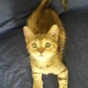 Kater Sasha auf Malta, Katzenhilfe Olli eV