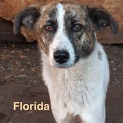 1 Tier in Rumänien durch Namenspatenschaft Florida, Pro Dog Romania eV