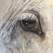 horse verkocht