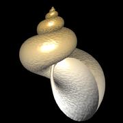 Schnecke - strukturierte Oberfläche