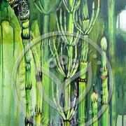 Ackerschachtelhalm/ Zinnkraut 100x50 cm