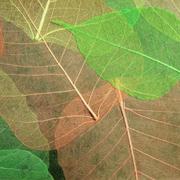 Blatttapete grün